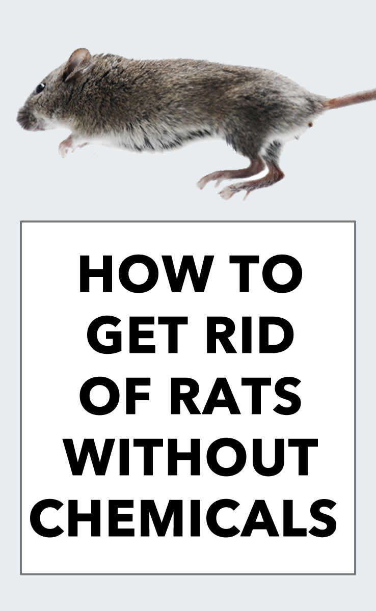 rat jumping image reads how to get rid of rats without chemicals