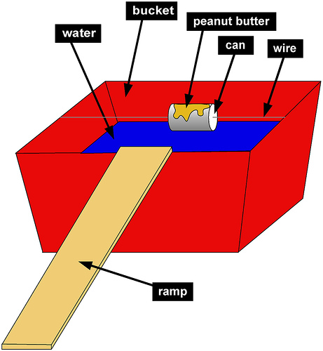diagram of bucket ramp trap to catch mice and rats