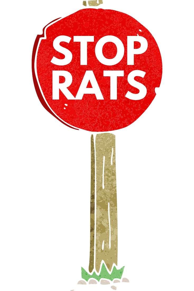 stop rats