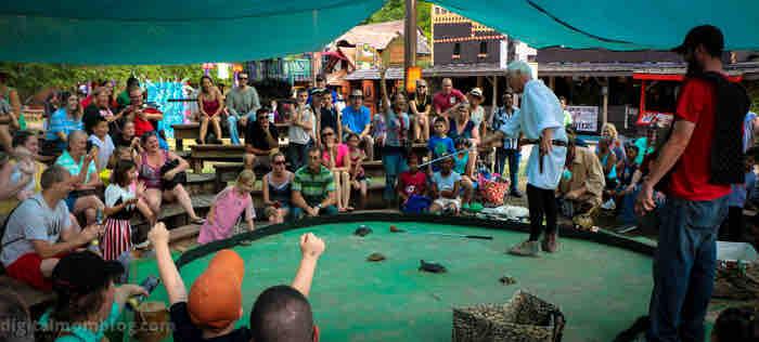 scarborough faire turtle racing