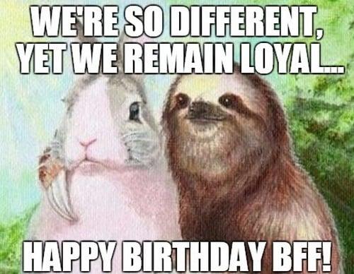 bff sloth birthday meme