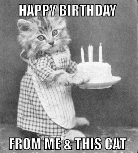 birthday cat meme friend