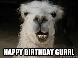 birthday meme llama happy birthday gurrl