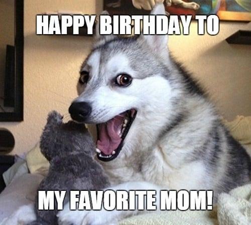 happy birthday mom dog meme