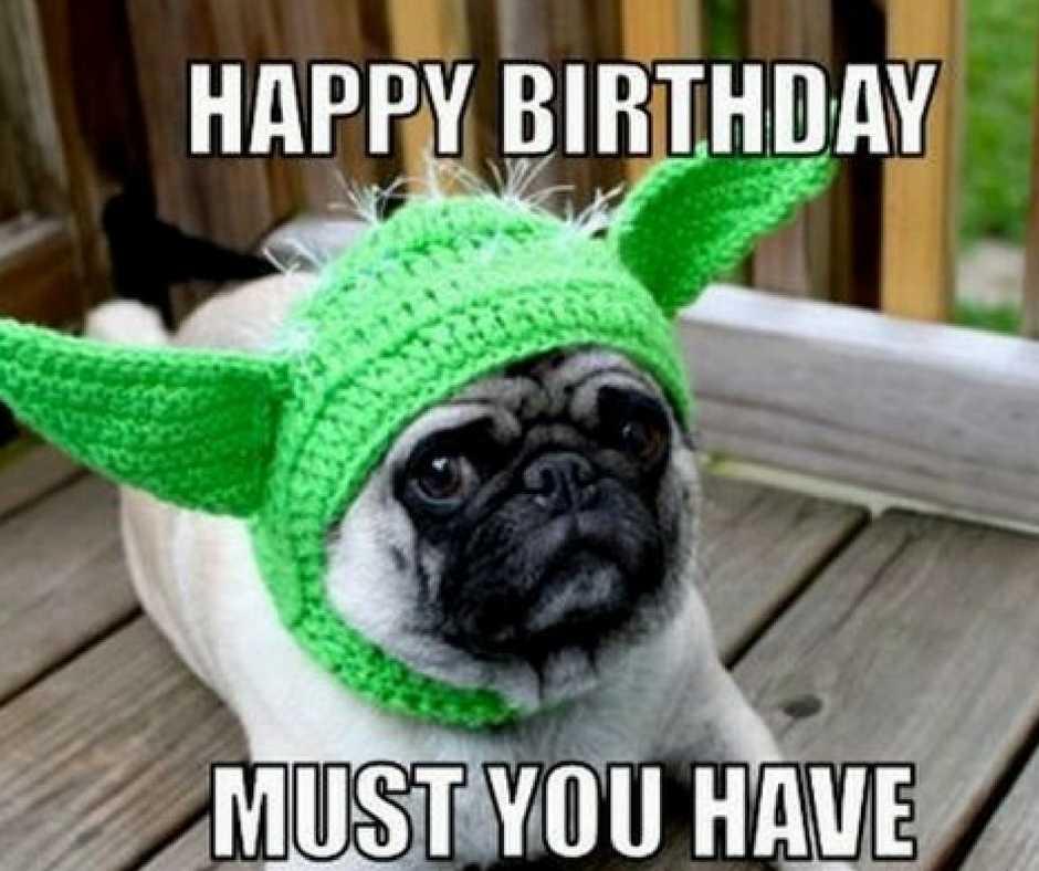 pug yoda hat birthday greeting funny birthday meme for guys