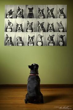 Dog Portrait Gallery Wall