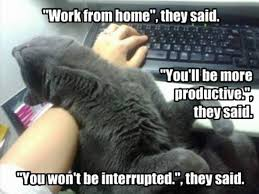 cats work from home