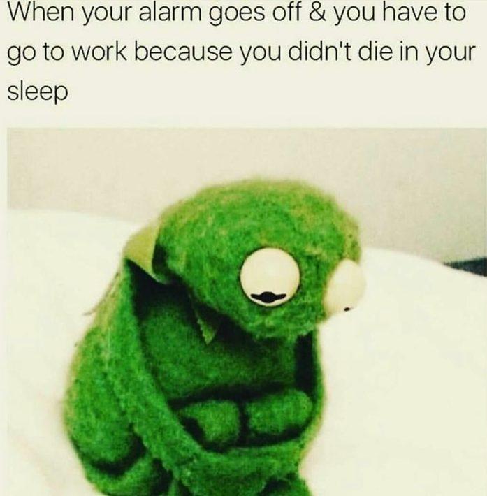 Back to Work Memes - kermit tells it how it is