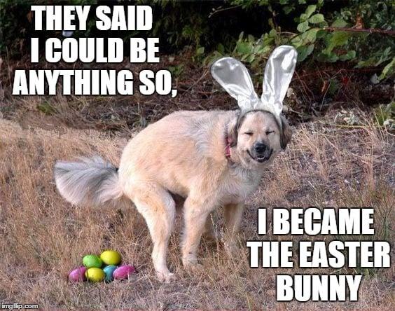 dog bunny easter meme