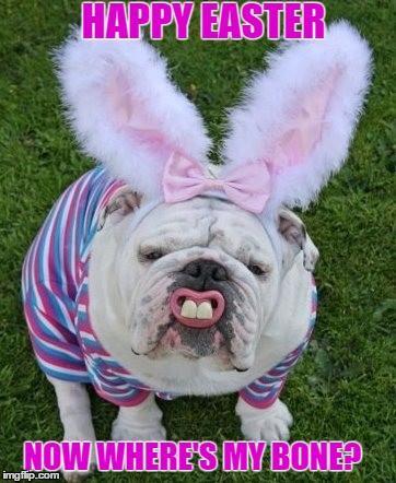 happy easter images english bulldog