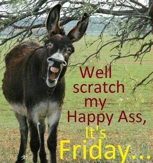 Well scratch my happy ass its friday - donkey jack ass - funny friday image