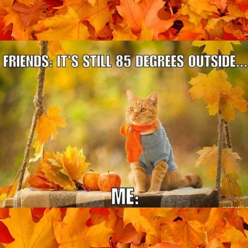 OCTOBER cat - friends its still 85 degrees