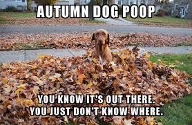 autumn dog poop - autumn memes