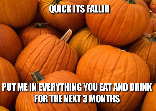 Pumpkin all the things