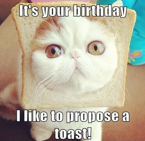 Birthday cat meme