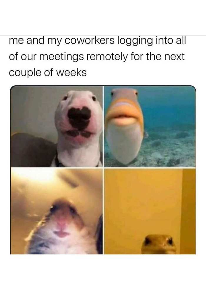 coronavirus quarantine memes about working remote meetings via video