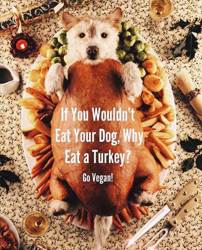 eating turkey thanksgiving