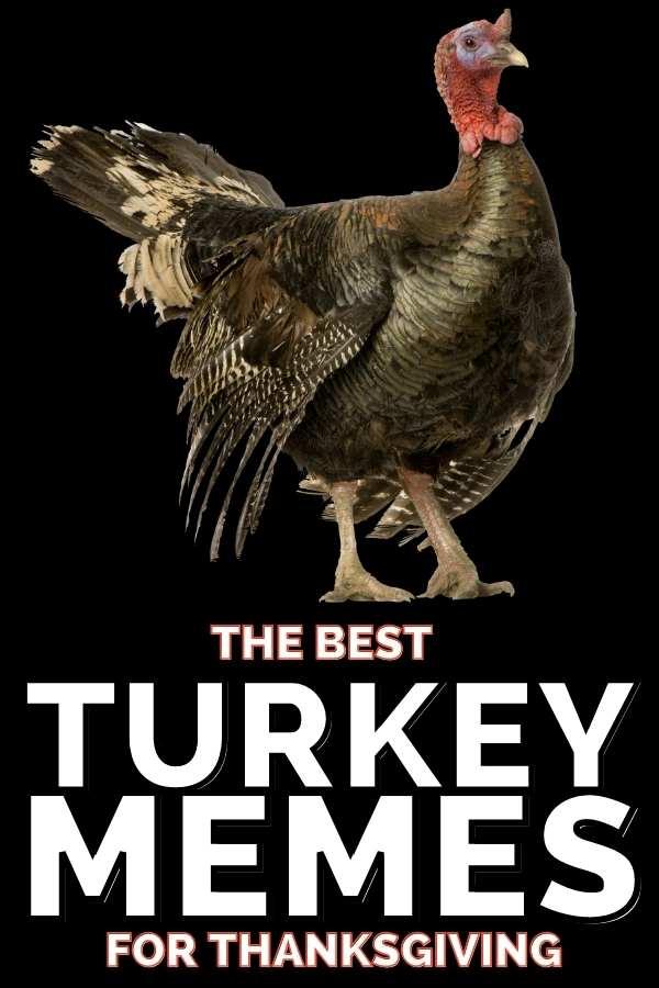 Funny Turkey Memes