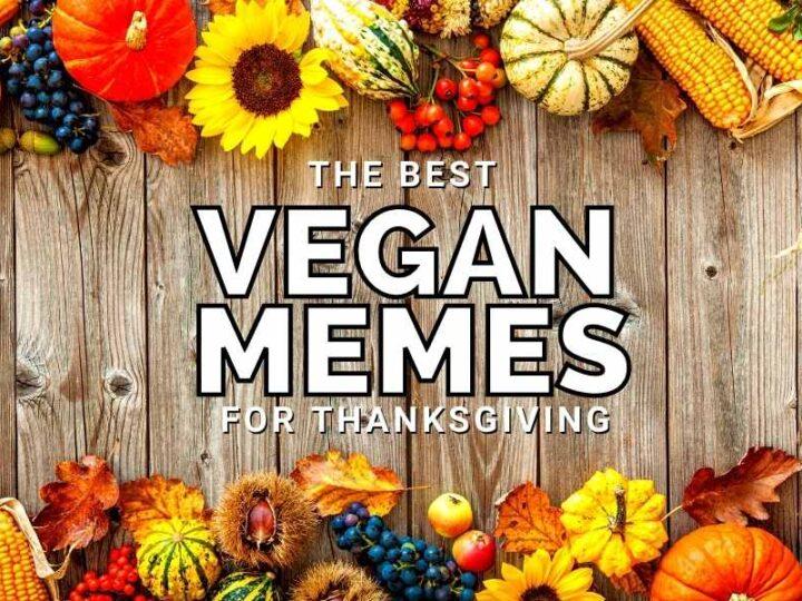 funny vegan memes for thanksgiving
