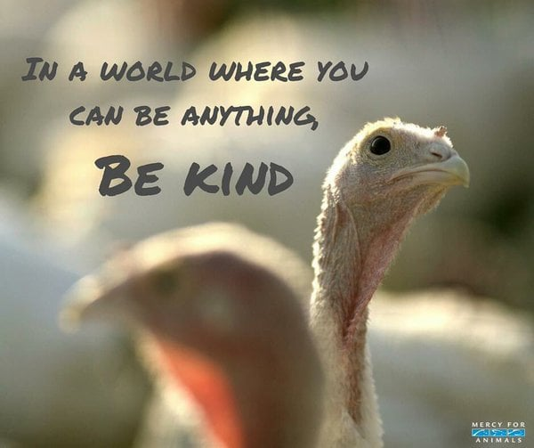 vegan thanksgiving meme be kind