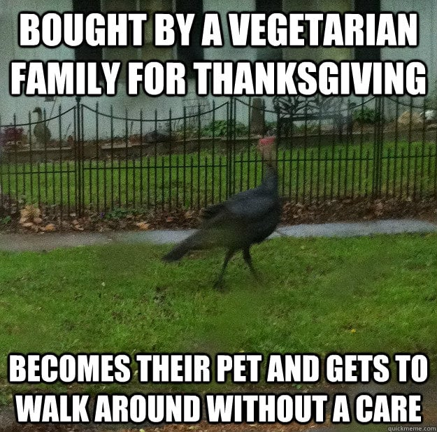 vegetarian turkey pet meme
