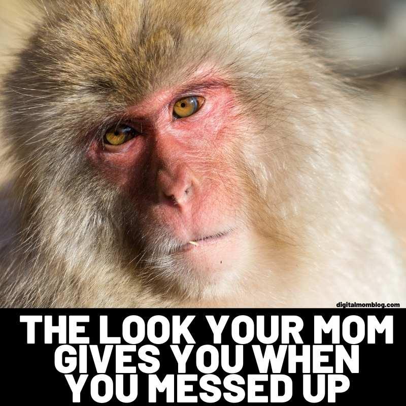 monkey meme – mom look