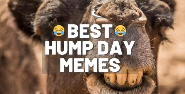 20 Hump Day Memes to Help You Laugh Thru Wednesday