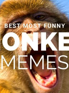 funny monkey memes