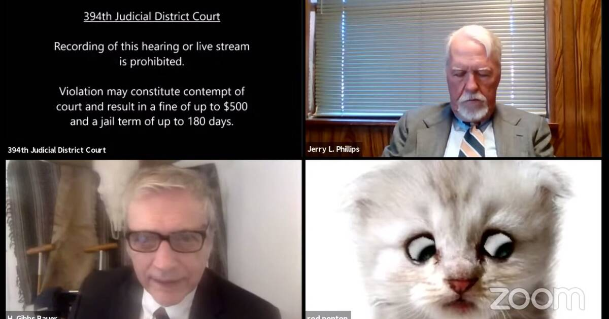 cat lawyer zoom meme