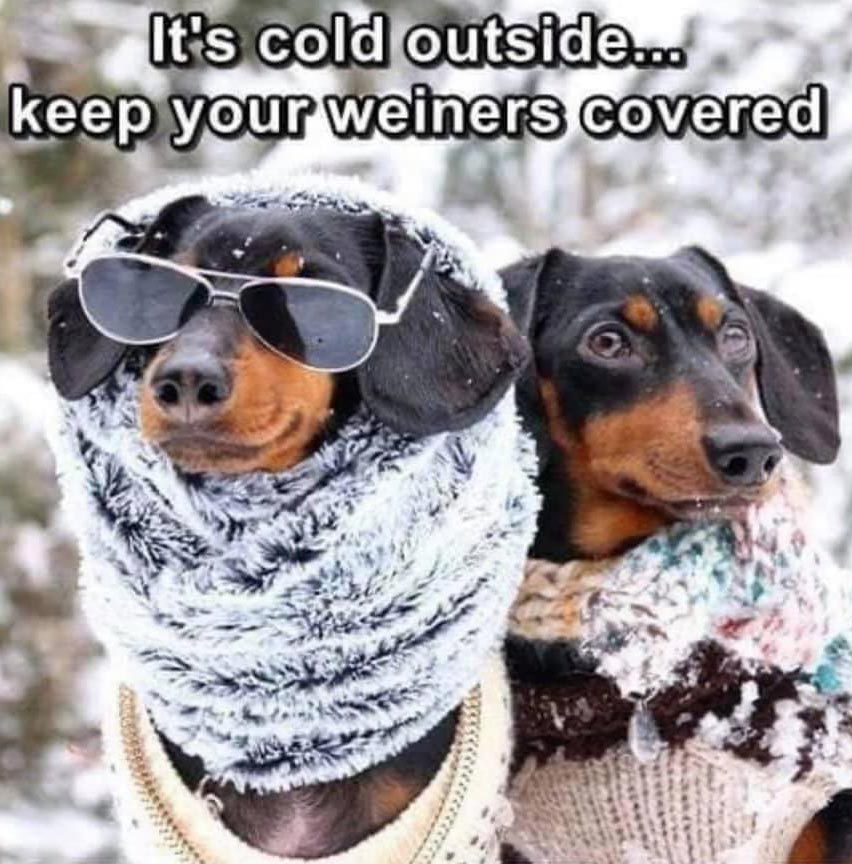 Cold Weather Memes – Keep Dogs and Weiners Warm!