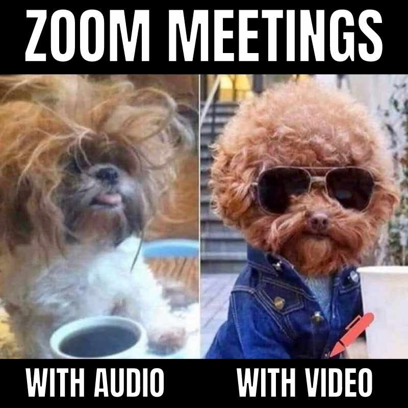 dog zoom audio video meme