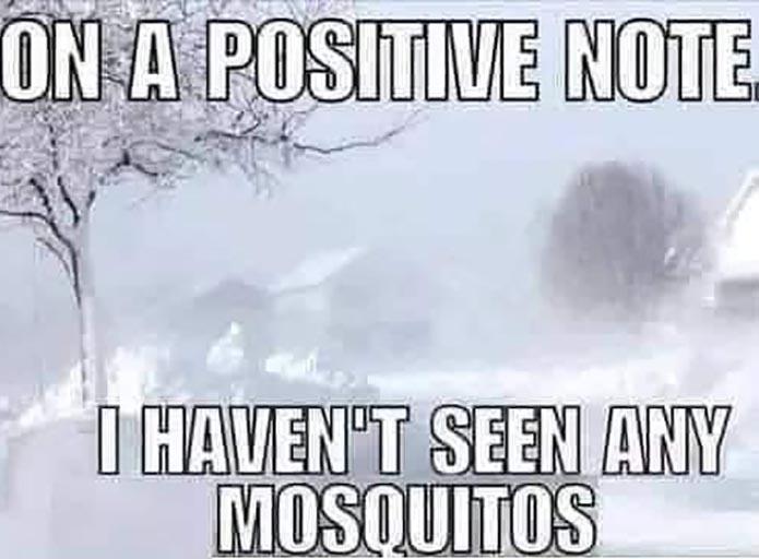 no mosquitos texas meme