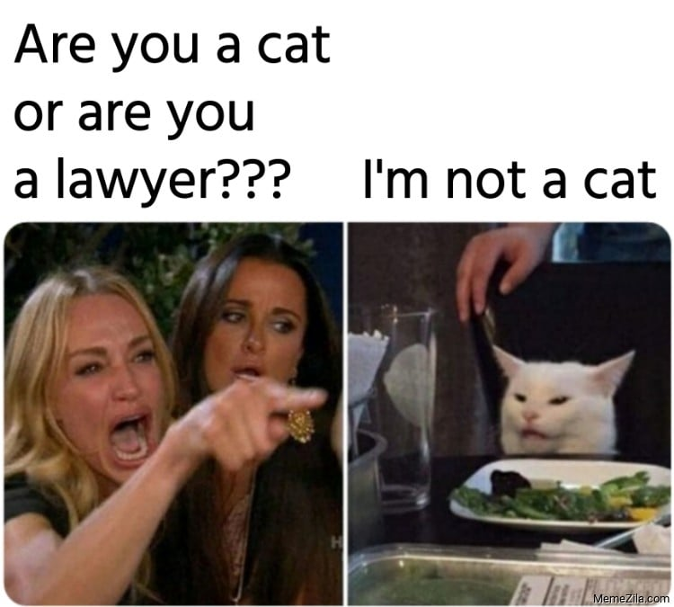 zoom cat lawyer meeting meme